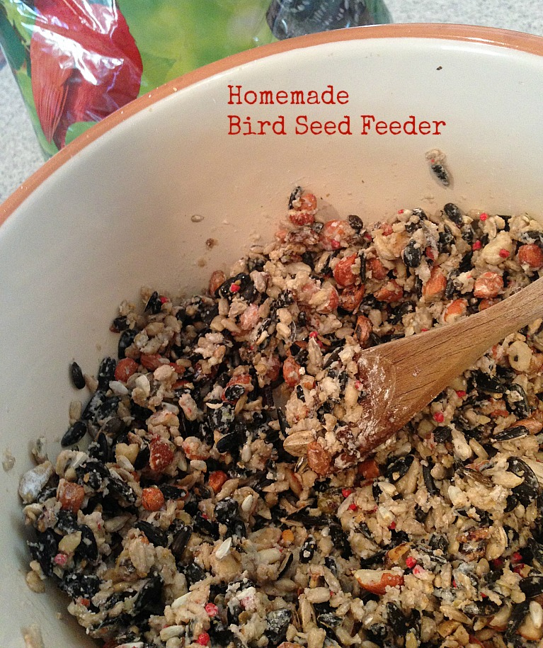 Homemade Bird Seed Feeder