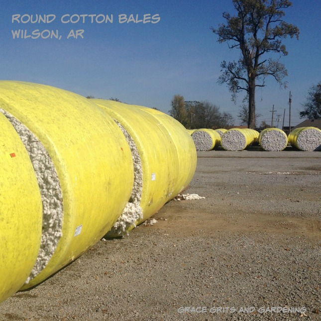 round cotton bales - farm art friday