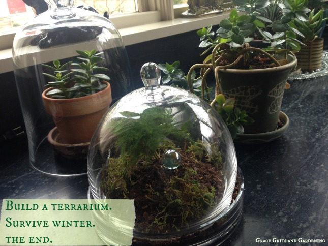 How to Build a Terrarium and Survive Winter