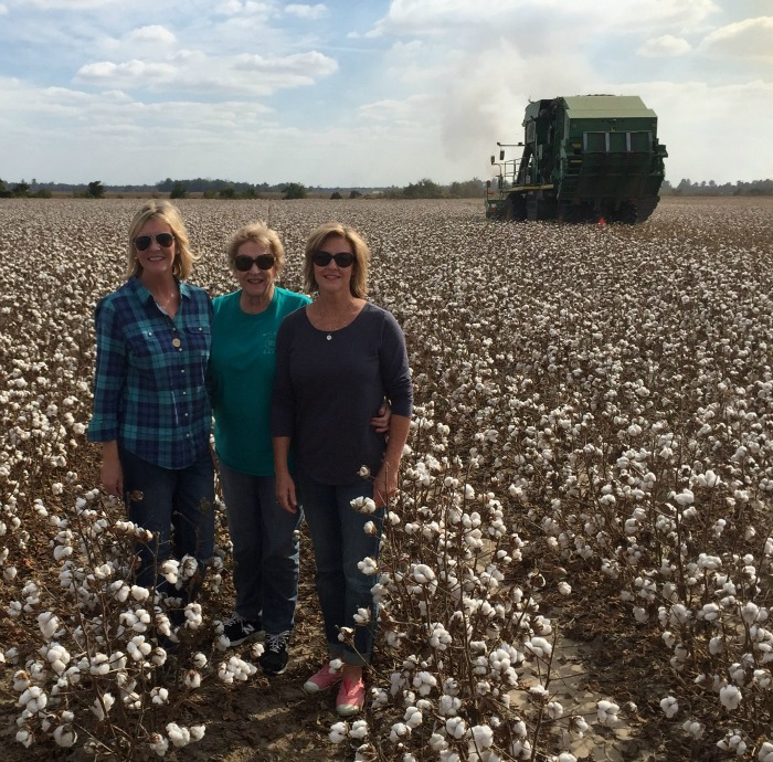 in the cotton field
