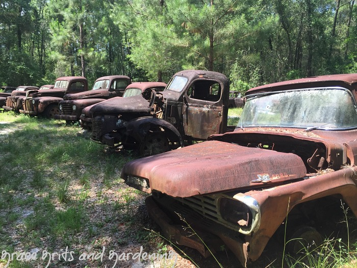 rusted Ford truck collection, Florida
