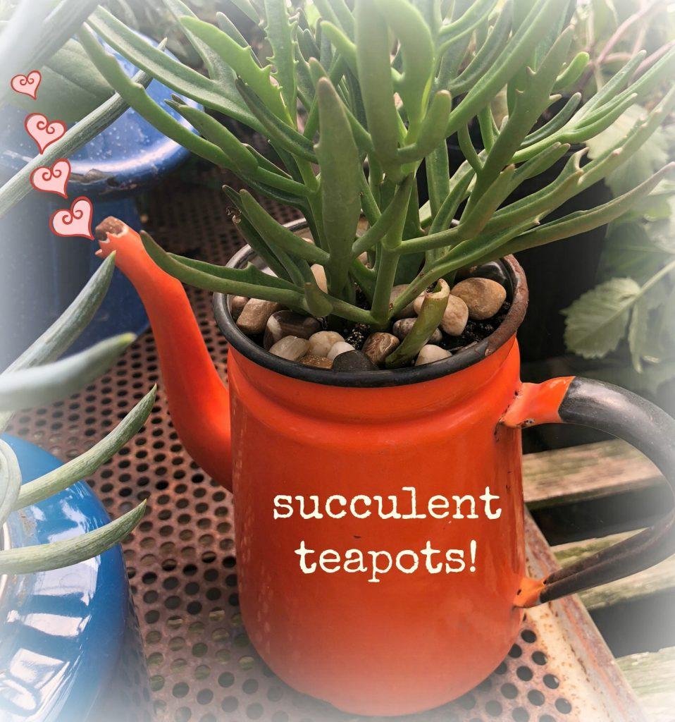 Succulent teapots