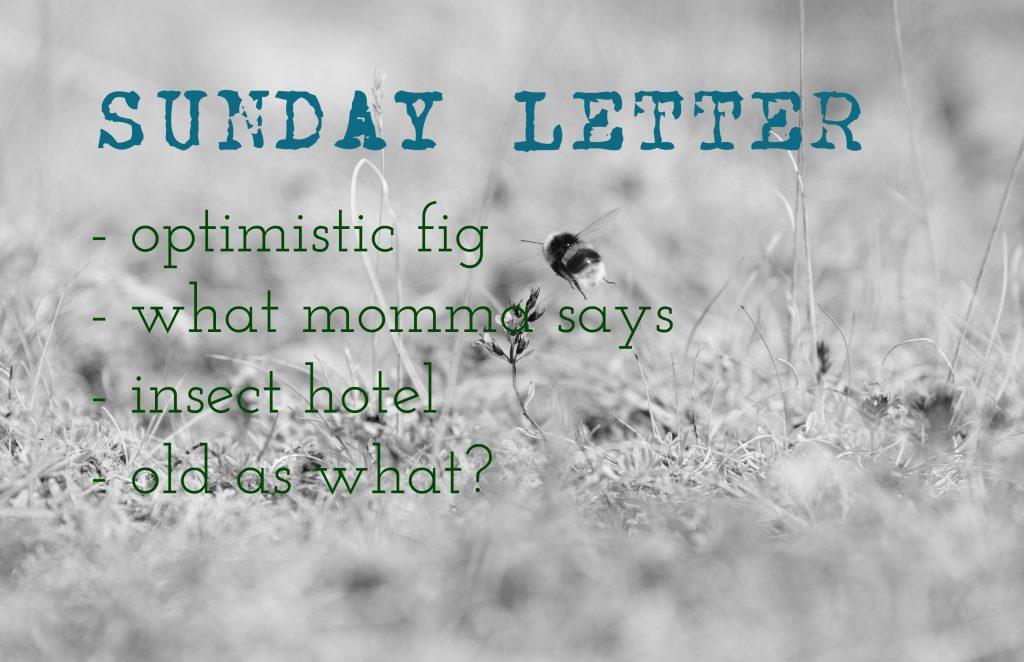 Sunday Letter 09.16.18