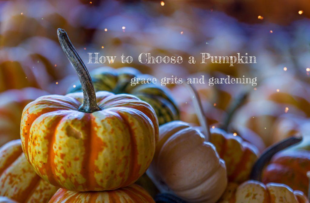How to Choose a Pumpkin