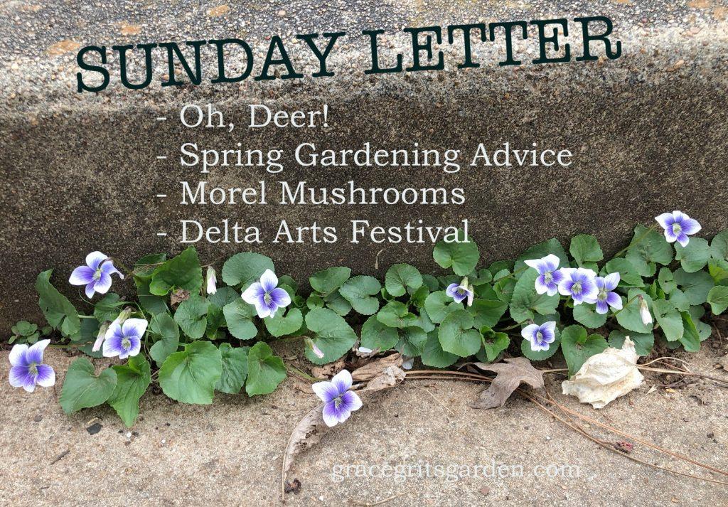 Sunday Letter 03.31.19