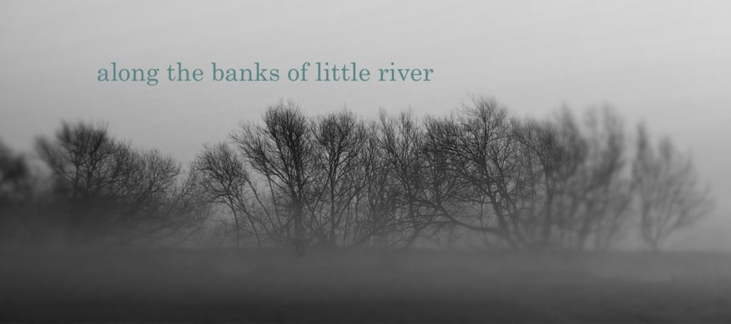 along the banks of little river