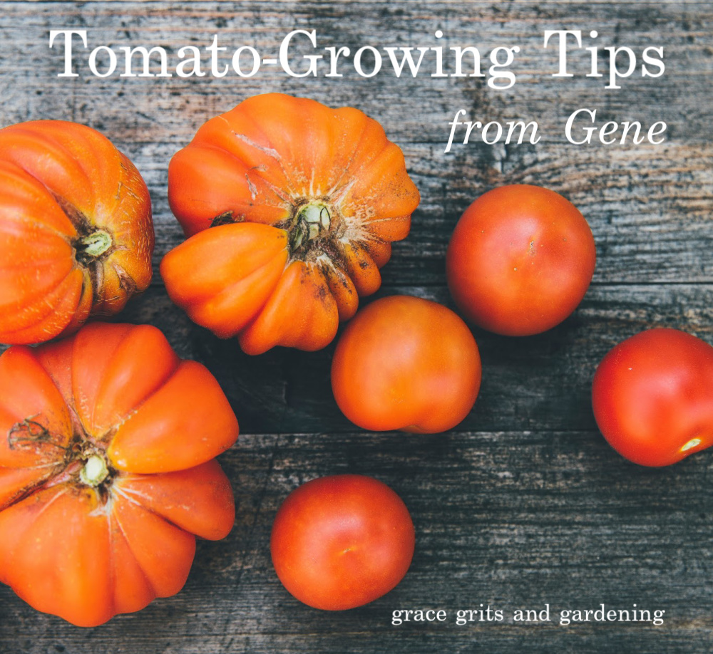 Tomato Growing Tips from Gene