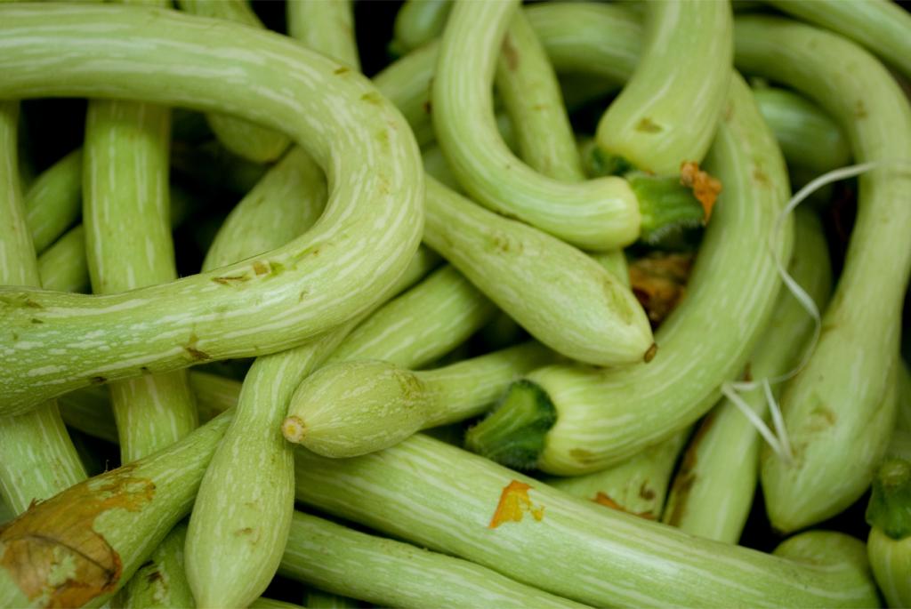 Trombetta Zucchini