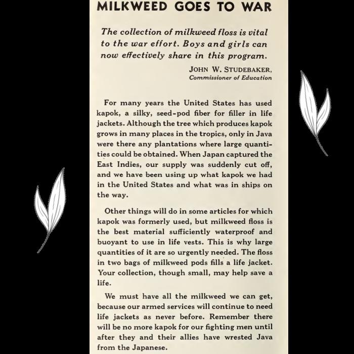 Milkweed Goes to War