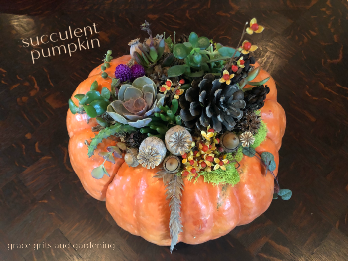 How to make a Succulent Pumpkin (and save the year)